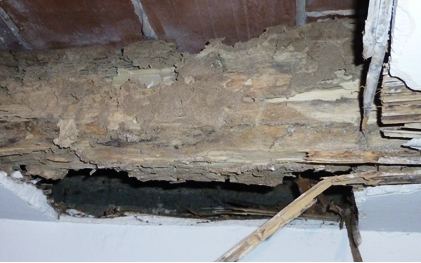 refuerzo estructural por termitas